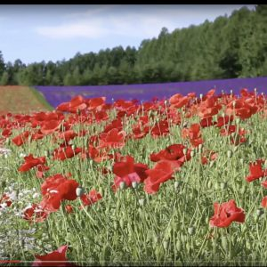 【制作事例】動画:北海道の夏の空