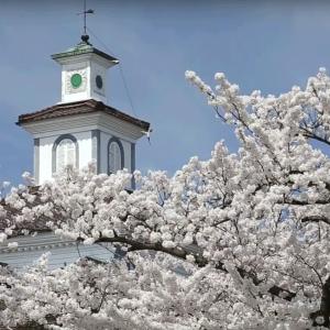 【制作事例】動画:2016年桜